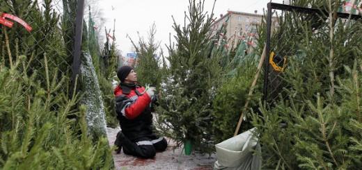 Рынок новогодних елок в Кирове